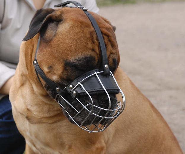 Dog muzzle to stop a DOG from chewing things up